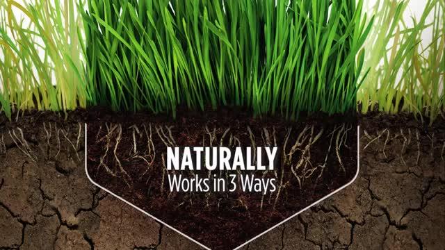 Scotts Lawn Care & Lawn Fertilizer Products - Ace Hardware
